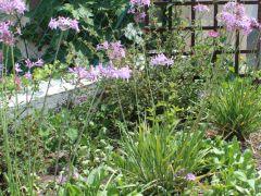 jardins12 placette 1200x500