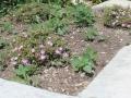 jardins15 placette 1200x500
