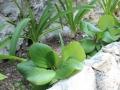 jardins9 placette 1200x500