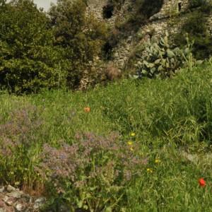 jardin moulins saint-andré de la roche