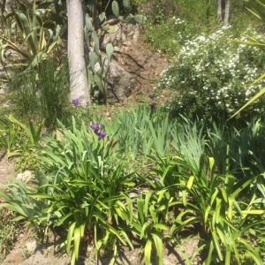 jardinIMG_1273
