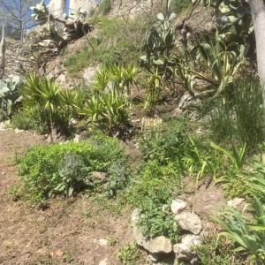 jardinIMG_1274