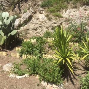 jardinIMG_1277